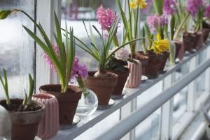 Serre jardin fleurs